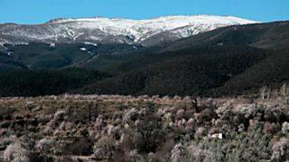 El bosque protector - Restauración forestal. El Marquesado de Zenete