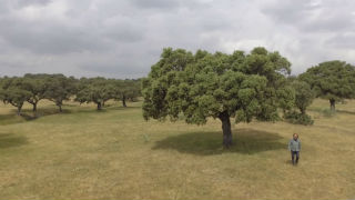 Aquí la tierra - Las riquezas de la dehesa