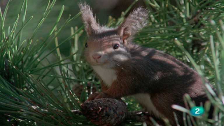 El hombre y la Tierra (Fauna ibérica) - Los roedores 1