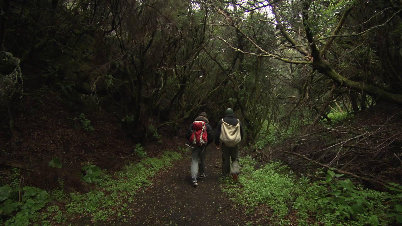 De ruta por el bosque de El Brezal