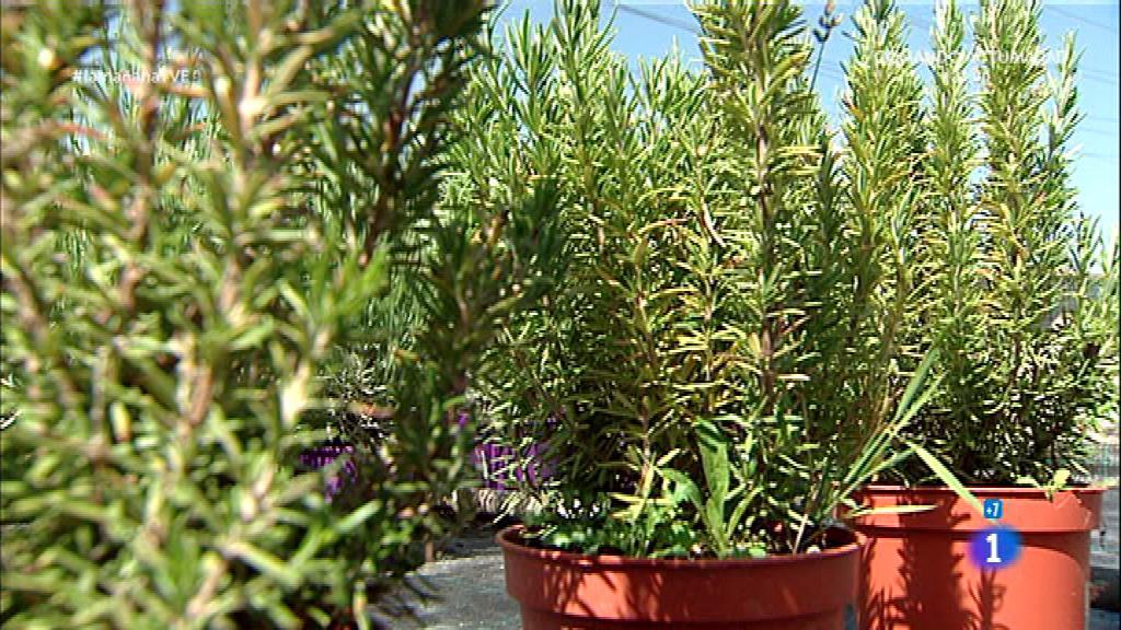 Saber vivir plantas medicinales botica natural for Plantas medicinales y ornamentales