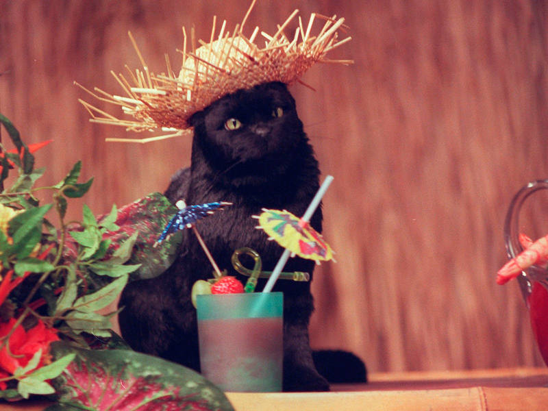 Salem, el gato de Sabrina