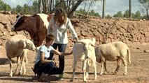 Ir al VideoLos Santuarios de Animales, lugares de protección para los animales más desfavorecidos
