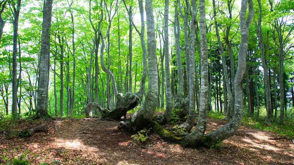 Voluntarios plantan árboles en el Día Internacional de los Bosques