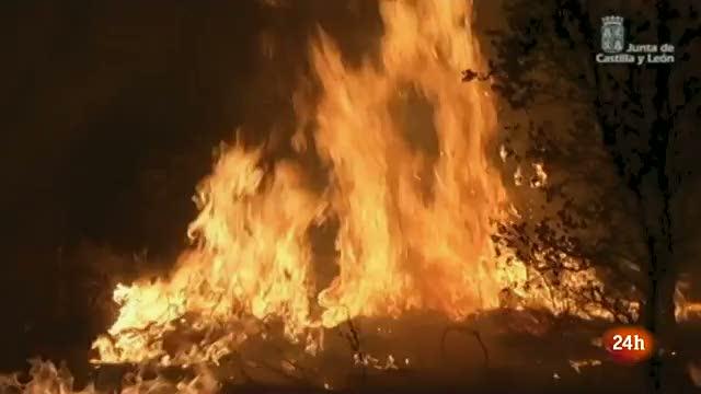 Ir al VideoSe mantiene el nivel 2 en el incendio de Castrocontrigo (León) ya que la acción del viento ha activado algunos focos