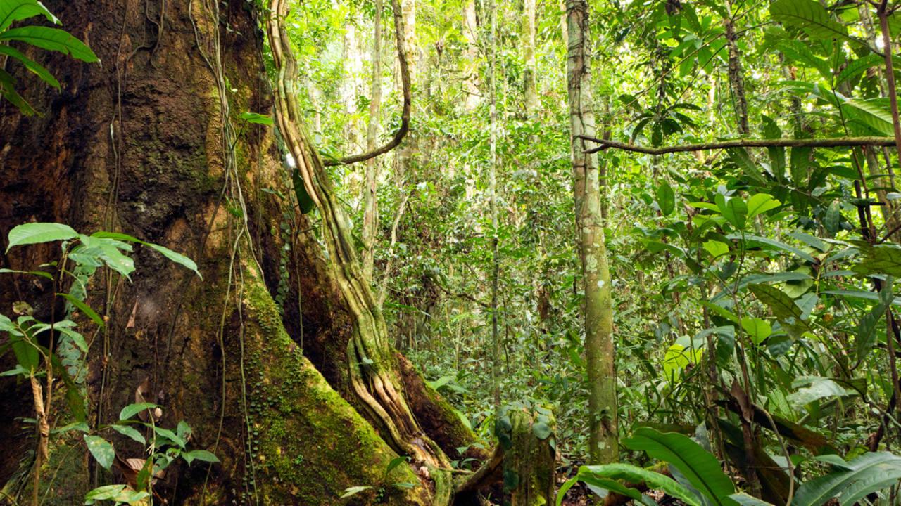 Se necesitar n al menos otros 300 a os para descubrir for Arboles perennes en argentina