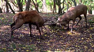 ¡Qué animal! - Selva de Irati (Navarra)