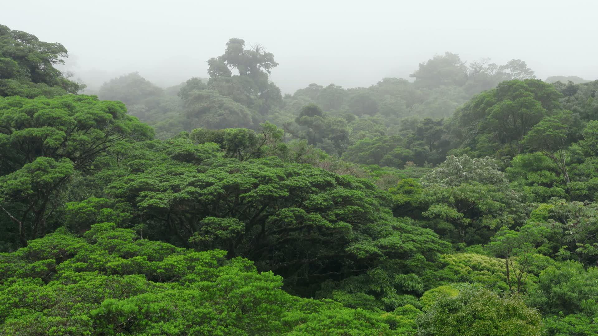 La selva tropical nubosa en 39 planeta selva 39 for El tiempo en macanet de la selva