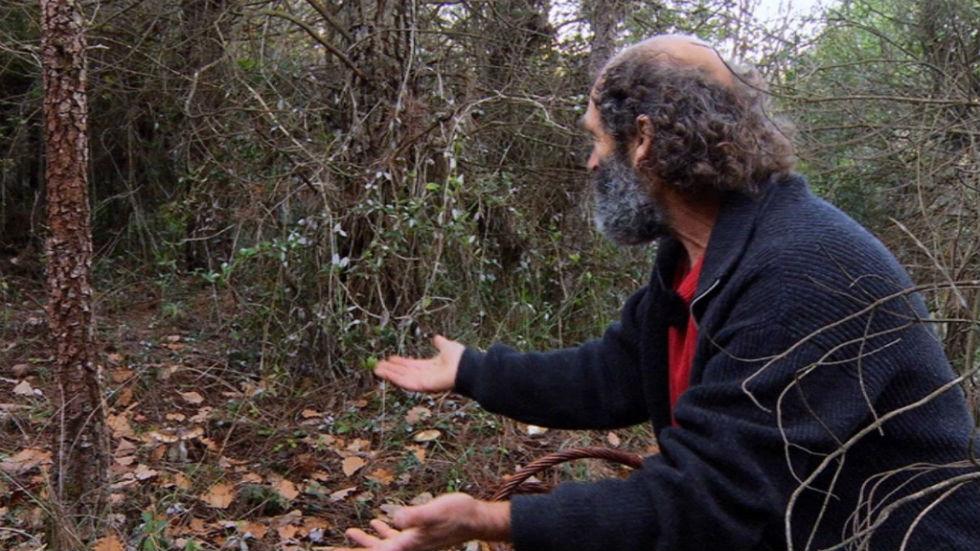 Aquí la tierra - El señor de los bosques, entre setas