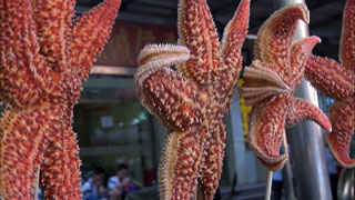Serpientes, arañas, escorpiones... tapas típicas en algunos mercados de Asia