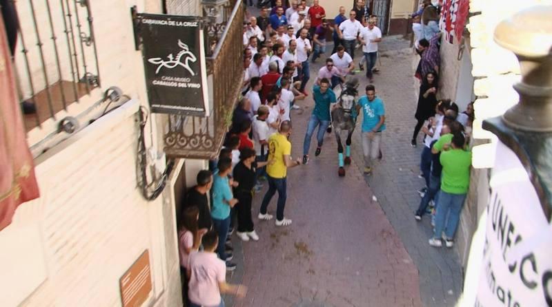 Sesenta caballos recorren, en menos de ocho segundos, la cuesta hacia el castillo de Caravaca de la Cruz bajo la mirada de más de 150.000 personas.