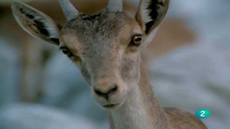 El hombre y la Tierra (Fauna ibérica) - Las sierras de Cazorla y de Segura, 1