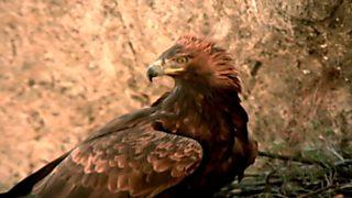 El hombre y la Tierra (Fauna ibérica) - Las sierras de Cazorla y Segura, 1