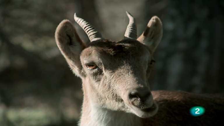 El hombre y la Tierra (Fauna ibérica) - Las sierras de Cazorla y de Segura, 2