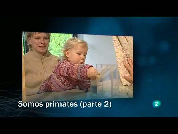 Redes - Somos primates - Segunda parte