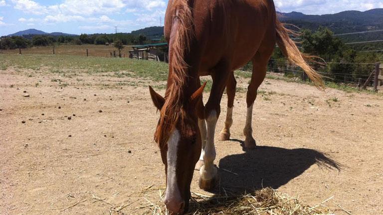 Aquí la Tierra- Terapia equina, en el diván con caballos