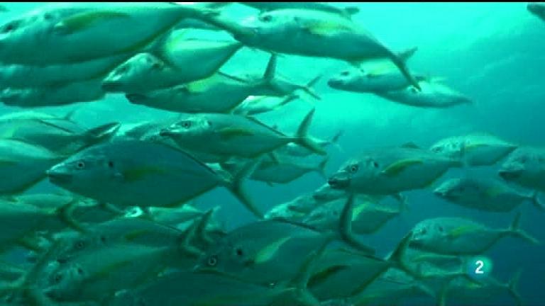 Jara y sedal - El tiburón de Amanay