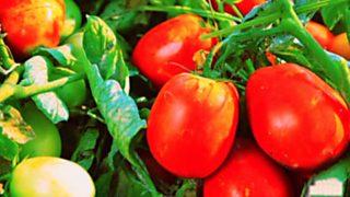 Fabriclan - Tomate frito