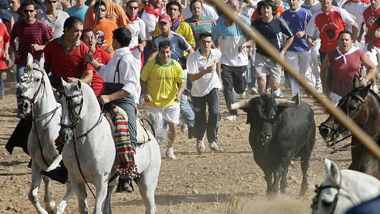 El Toro de la Vega de Tordesillas divide un año más a dectactores y partidarios