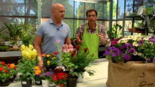 Aquí la tierra - Trucos para cuidar plantas en verano