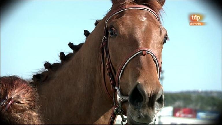 Turf - Carreras de caballos - 25/03/12