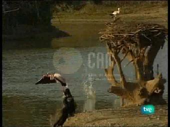 Guardianes de hábitat - El último edén