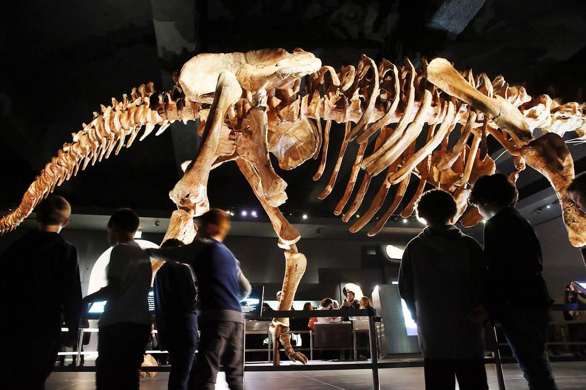 Varios visitantes observan el gran esqueleto