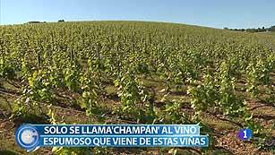 Más Gente - Más Cocina - Viajamos a las viñas de las que sale el champán