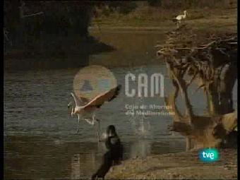 Guardianes de hábitat - Vida en dos palmos de agua