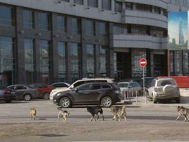 Los lobos toman las calles de Moscú