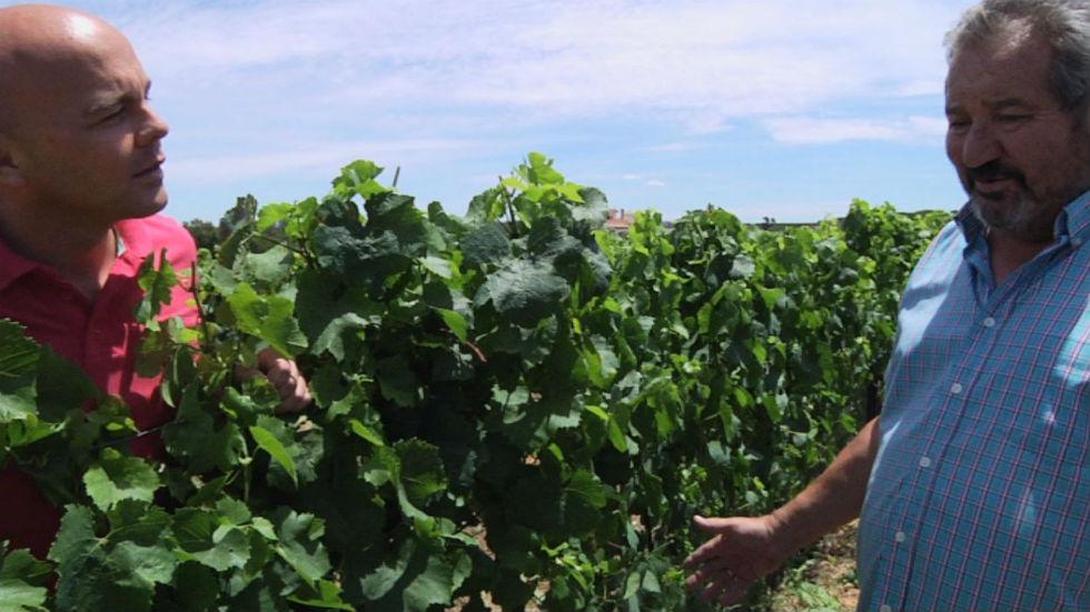 Aquí la tierra - Un vino español con aire suizo