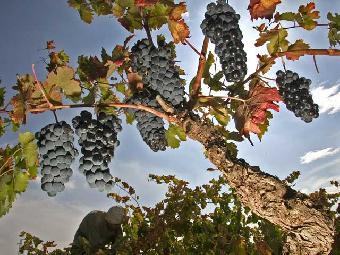 Comando Actualidad - De vinos