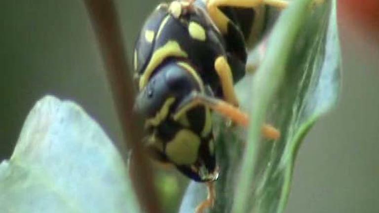 """IV Concurso de Cortos RNE - """"Wasp up. La avispa que soñaba"""""""