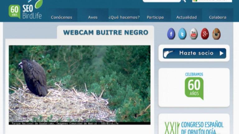 Una webcam que nos lleva a la misma sabana africana