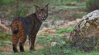 'WildMed, el último bosque mediterráneo'
