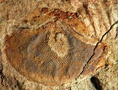 Resultado de imagen de Los fósiles más antiguos de la Tierra