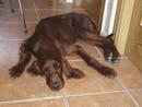 Ir a Fotogaleria Perros en 'El refugio' y en la residencia canina 'Chuchilandia'