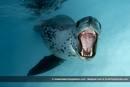 Ir a Fotogaleria Las entrañas del océano, al descubierto