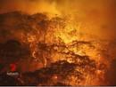Ir a Fotogaleria Australia asolada por el fuego