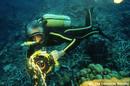 Ir a Fotogaleria El mundo de Jacques Cousteau