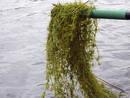 Ir a Fotogaleria Las aguas residuales contaminan las Tablas de Daimiel