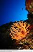 Ir a Fotogaleria Corales marinos amenazados