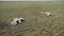 Ir a Fotogaleria La lucha contra el envenenamiento de nuestra fauna