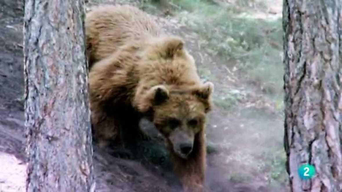 Naturalmente - El hábitat del oso pardo - ver ahora
