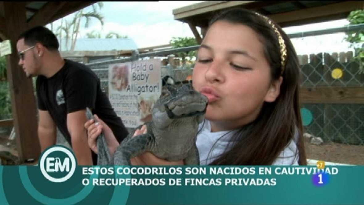 Españoles en el mundo - Miami - Ver ahora
