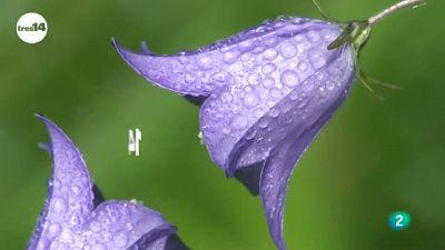 tres14 - curiosidades científicas - ¿Las flores están menos perfumadas?