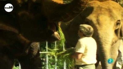 tres14 - curiosidades científicas -  Elefantes libres