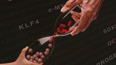 El ser humano lleva siglos buscando fórmulas que le acerquen a la eterna juventud