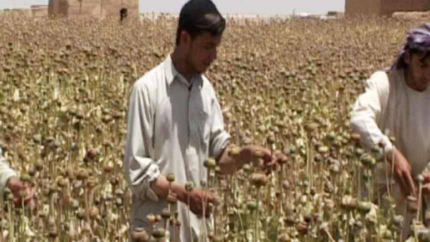 La Noche Temática - La ruta del opio afgano - Avance