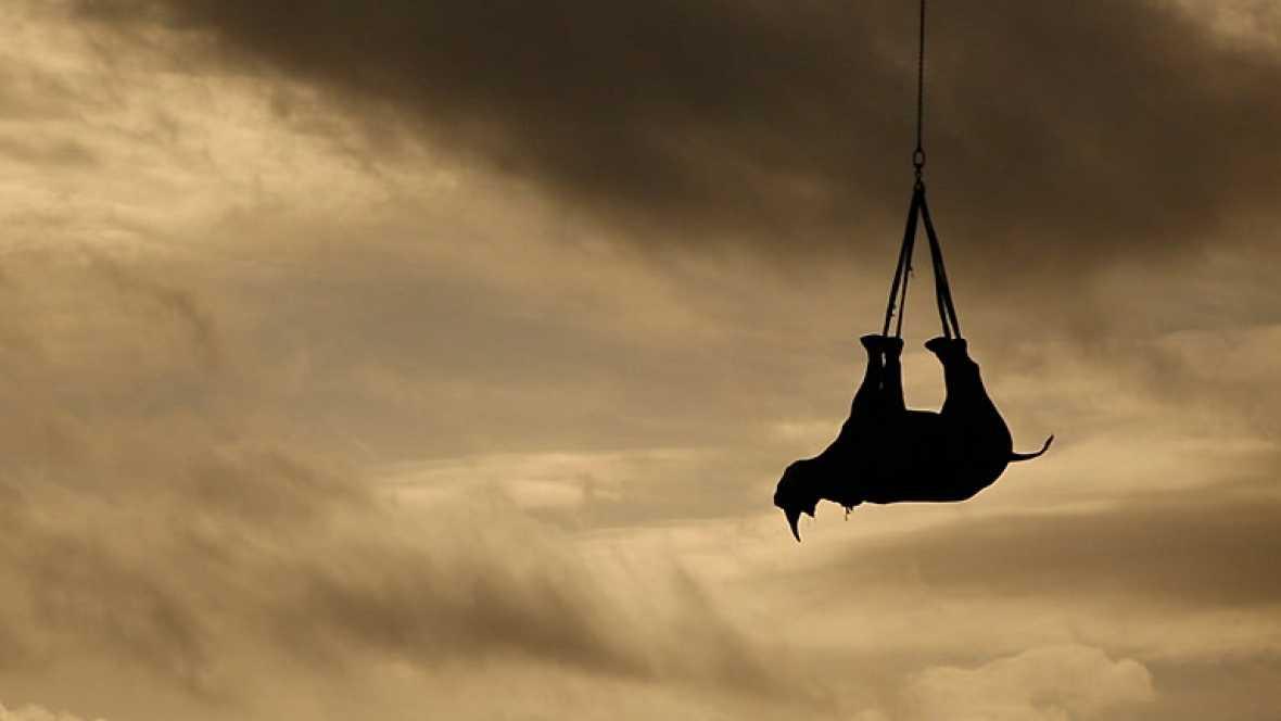 Rinocerontes negros voladores en Sudáfrica